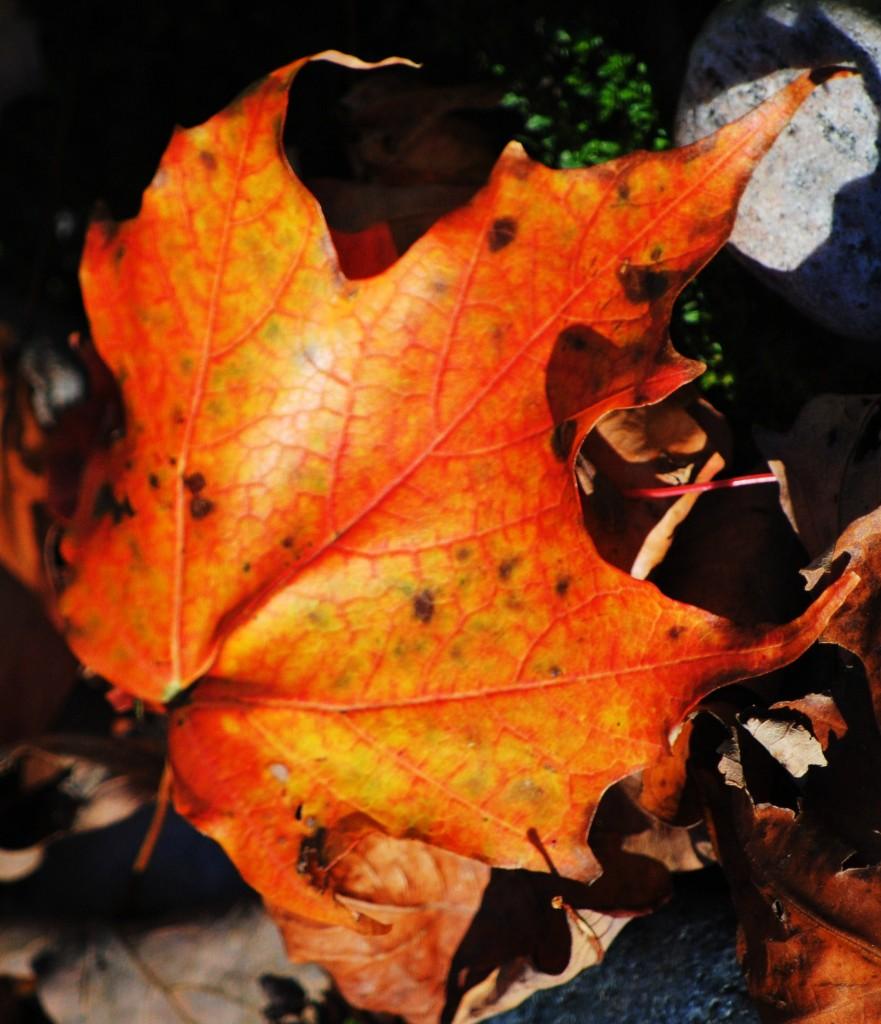 fall 2010 026 2