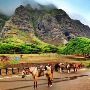 oahu horses